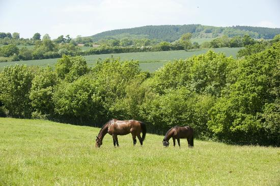 Wheathill, UK: View from the paddock