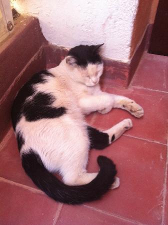 Riad Dar Tiflet: Dar Tiflet cat