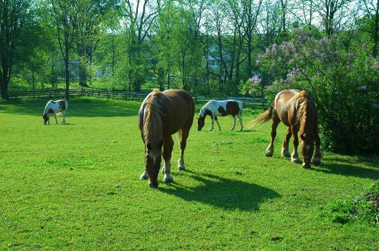 Horses in Wade House pasture