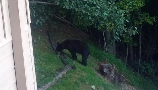 The Foxtrot Bed and Breakfast: Bear viewing from the deck.