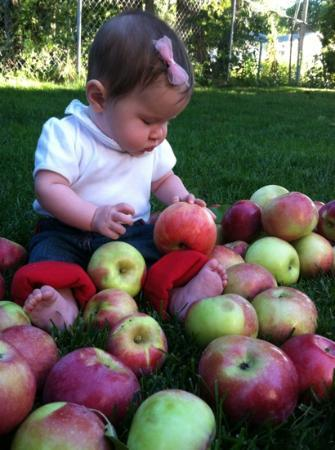 Shelburne Farm: cortlands & macs oh my!