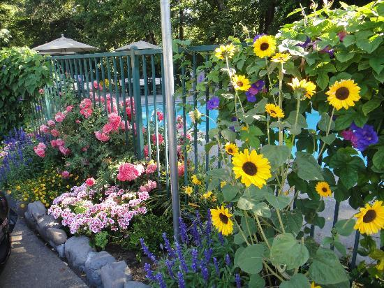Jack London Lodge: Nice gardens and pool