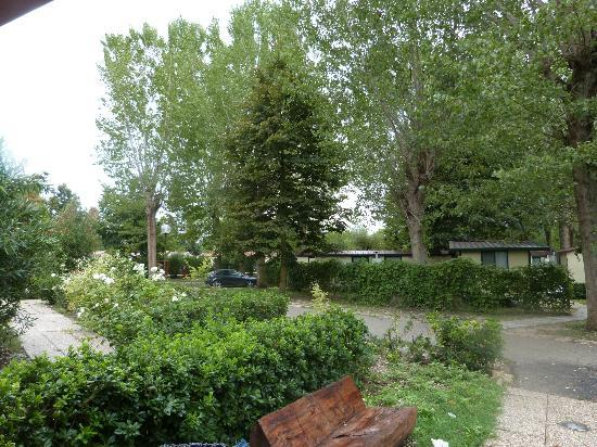 Camping Tiber: view of grounds