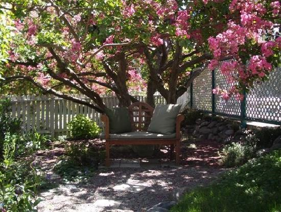Shrew's House Bed and Breakfast: The 87 year old Crape Myrtle Tree