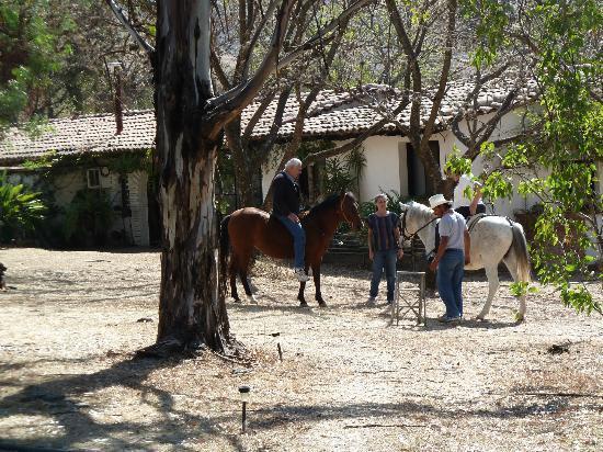 Casa Raab: Rebecca's horses