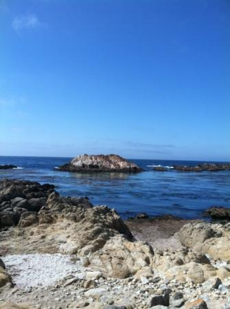 Carmel Valley Ranch: seal rock beach - 20 minutes away with typical traffic