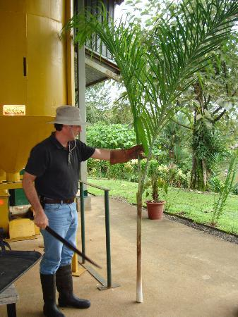 La Anita Rainforest Ranch : Pablo, our host at the cocoa ranch. This palm plant became lunch.