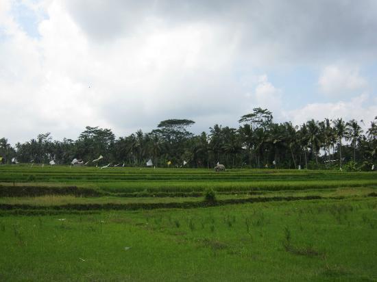 Villa Agung Khalia: View