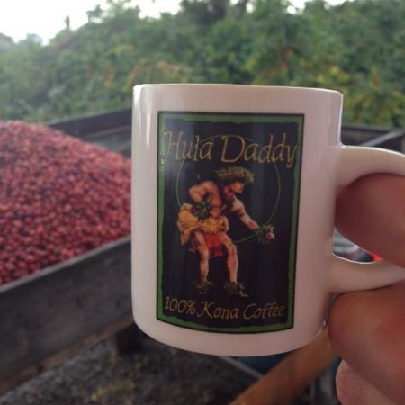 Hula Daddy Kona Coffee: harvesting