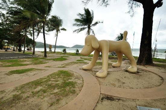 Nap Patong: パトンビーチの犬 