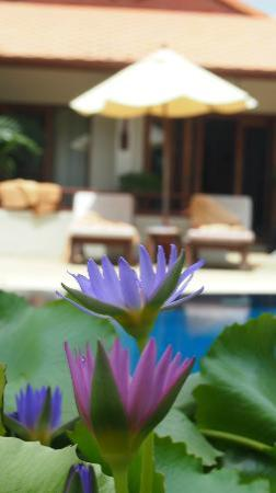 โรงแรมไรซิ่งซัน เรสซิเดนซ์: One view of villa