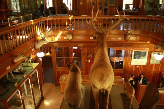 Banff Park Museum : Museum interior from second floor