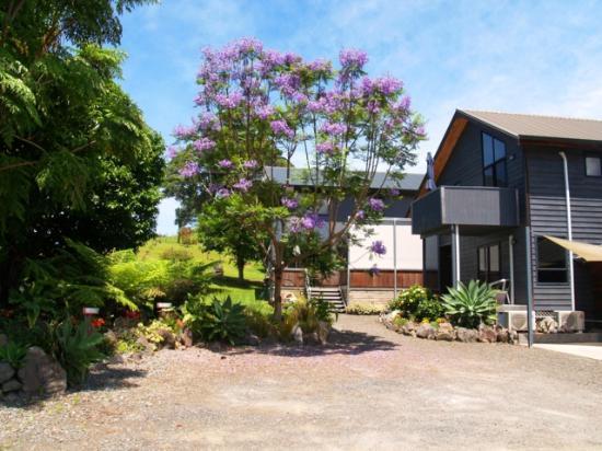 Tairua Coastal Lodge: Jacaranda in bloom