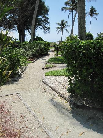 Caribe Beach Resort: We love the beach paths!