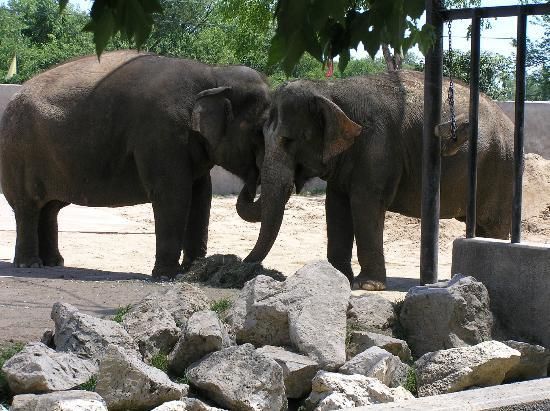 Niabi Zoo: old friends