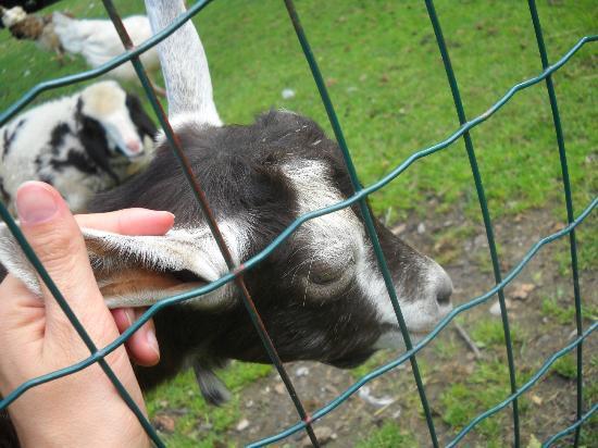 Wirtshaus Nattererboden: gli animale dell'agriturismo