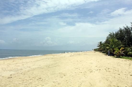 Marari Beach Resort : The Beach
