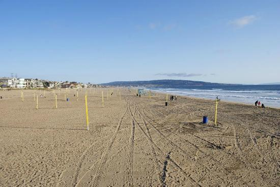 Manhattan Beach, CA: Decine di campi da beach Volley