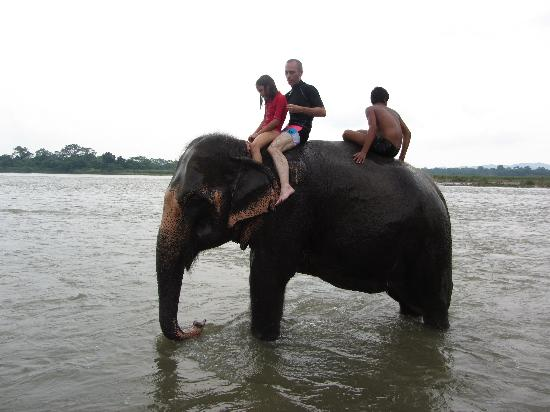 Tigerland Safari Resort: Elephant bath (Chitwan)