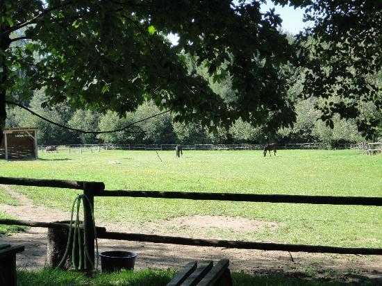 Resort Svata Katerina: Horse riding