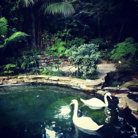 Hotel Bel-Air: swan lake