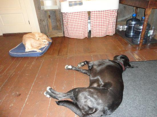 Hopkins House Farm Bed & Breakfast: It was a tiring romp through the fields