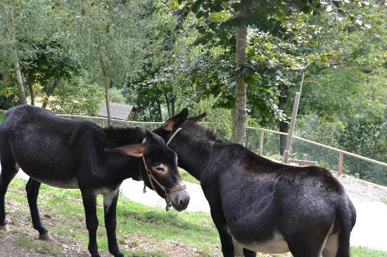 Camping Vall De Camprodon: Parque de Molló