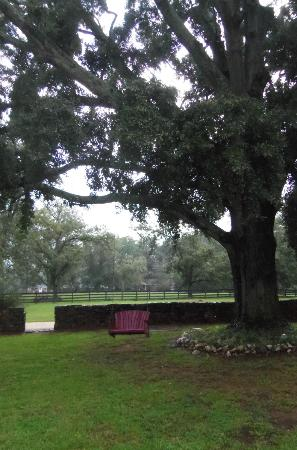 Madison Oaks Inn & Gardens: The swing and garden area