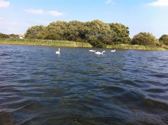 Hornsea Mere: view from the boat