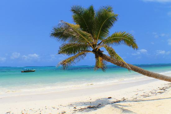 The Most Famous Palm Tree In Zanzibar On Echo Beach Picture Of