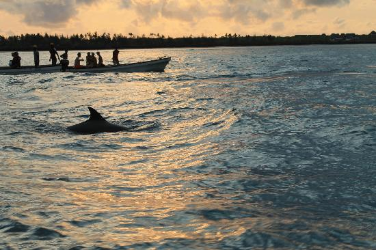 Echo Beach Hotel: Swimming with Dolphins. A trip worth doing.