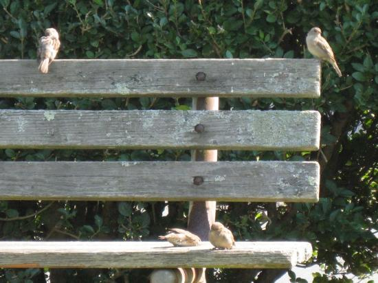 Naturally Good Foods and Cafe: Birds watching for crumbs