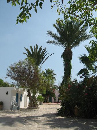 Residence Dar Sidi : Jardin