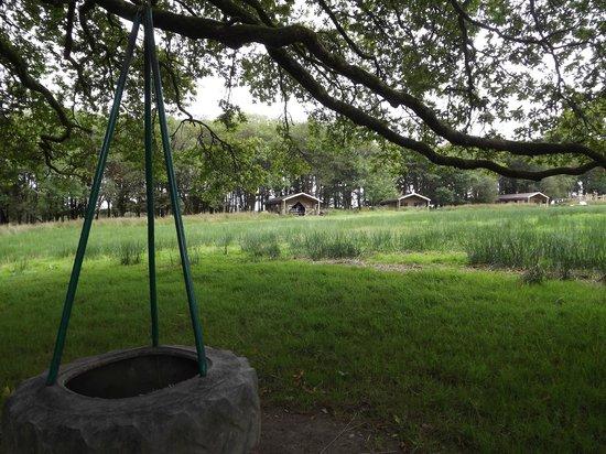 Berridon Farm: tyre rope swings