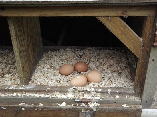Berridon Farm: fresh eggs for breakfast.