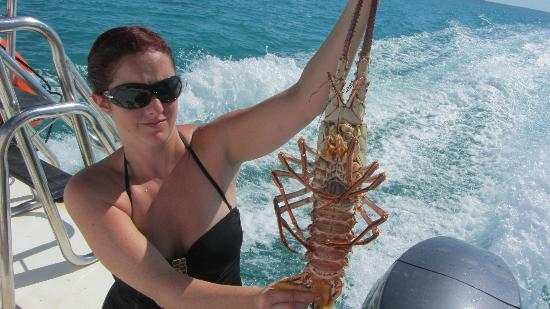 Island Vibes Tours: fresh caribbean lobster!