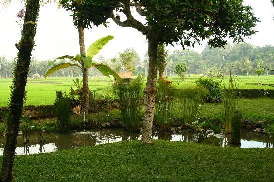 Tegal Sari: jardín