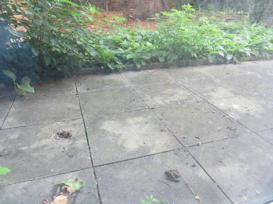 Access Maida Vale: Jardim exterior