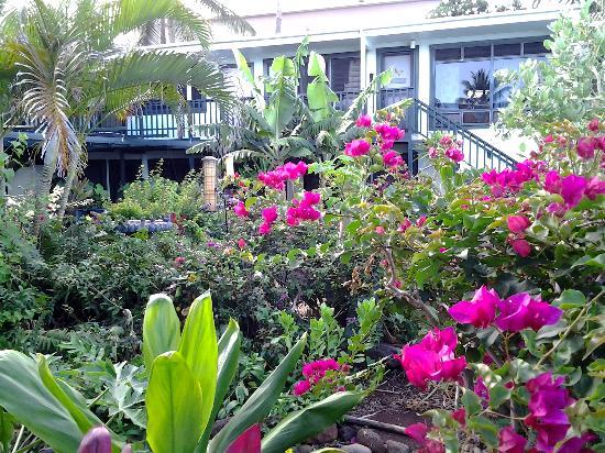 Makai Inn: Garden