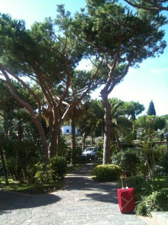 Hotel Terme San Lorenzo: il parco