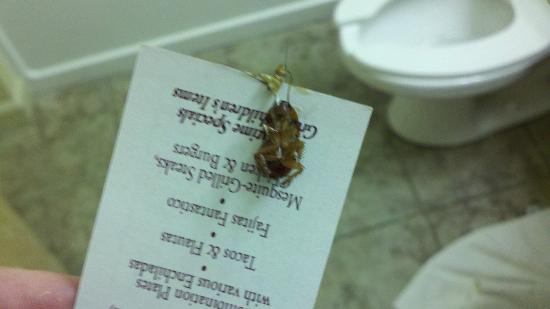 Econo Lodge Inn and Suites: 1st bug killed in room