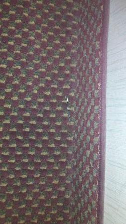 Econo Lodge Inn and Suites: Bobby pin housekeeping missed