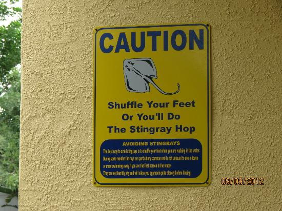 South Beach Condo/Hotel: Stingray Caution sign