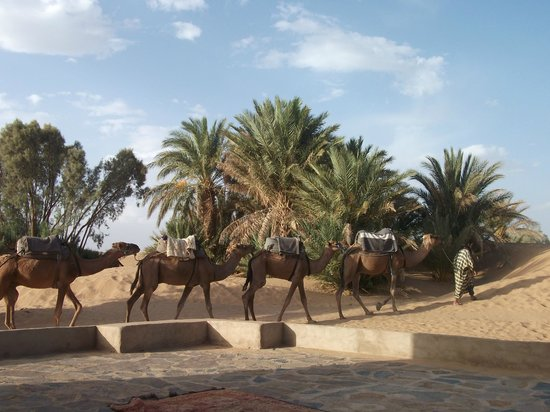 Hotel Ksar Merzouga: Camels waiting for passengers