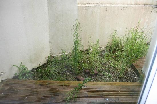 Glendorgal Hotel: Yet more weeds - think groundsman may have died/left