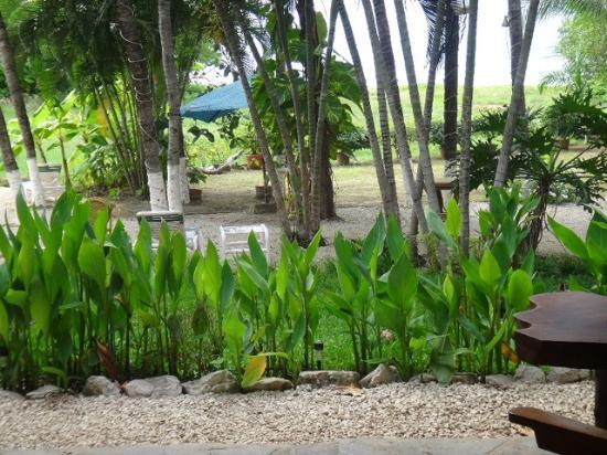 Hotel La Laguna del cocodrilo: view from my room, perfecto