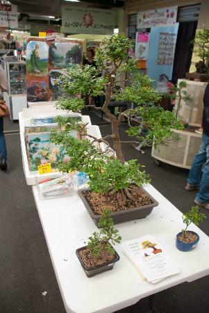 Subiaco Station Street Markets: Bonsai in Subiaco