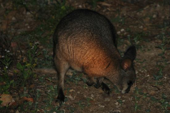 Warrawong Sanctuary: Animals seen on the night walk