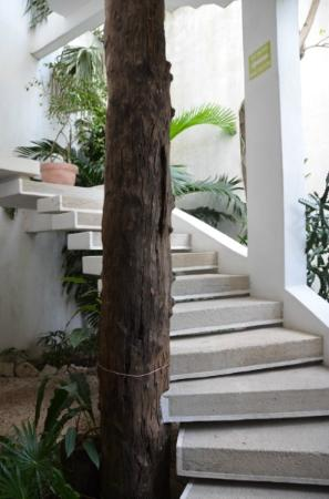 Mi Casa en Cozumel: The stairs down to Tamarindo