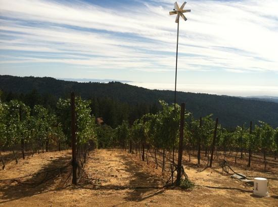 Loma Prieta Winery: the view